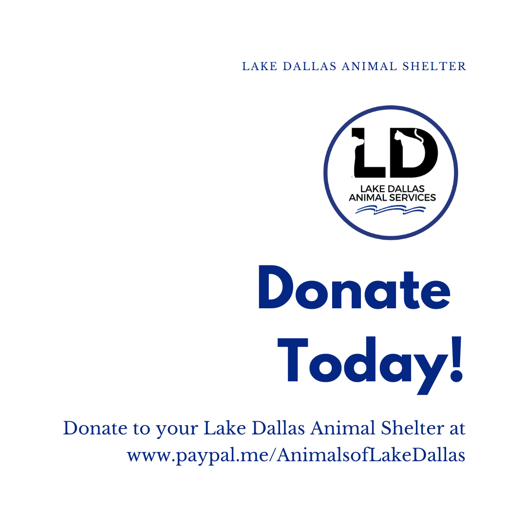 Donate Today Opens in new window
